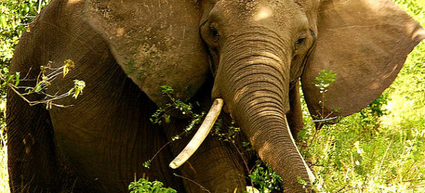 elephant in queen Elizabeth