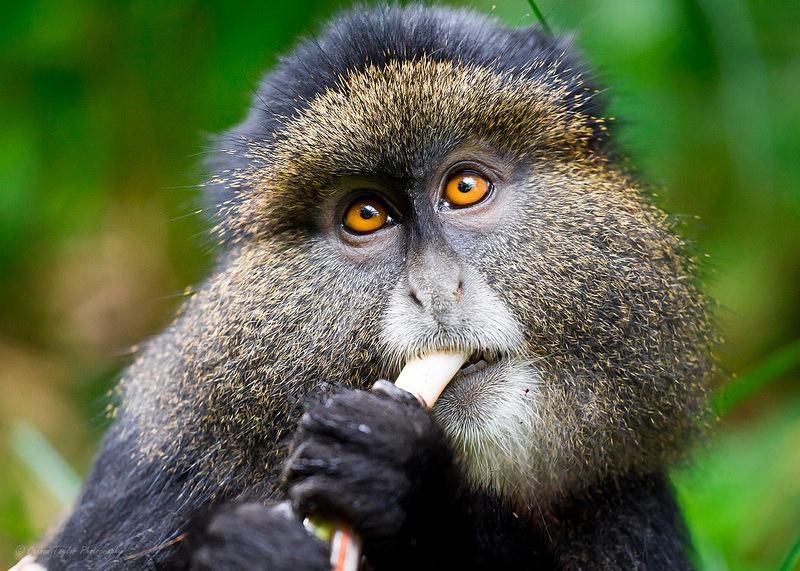 Abacus African Vacations™ Uganda Safaris