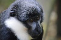 l'host monkey