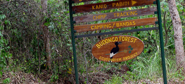 Budongo Forest Reserve