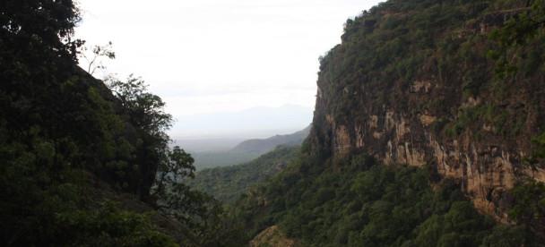 The Ridge View