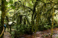 Forest walk in Bwindi National Park (4)