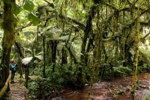 Forest walk in Bwindi National Park (4)
