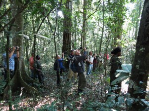 Chimpanzee tracking in Kibale (4)