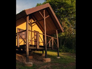 Chimps Nest Cottage (1)