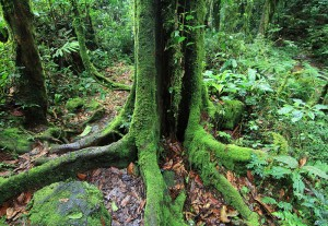 Forest walk in Bwindi National Park (2)