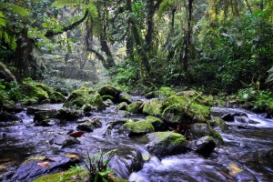 Forest walk in Bwindi National Park (6)