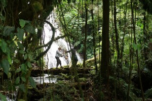 Forest walk in Bwindi National Park (7)