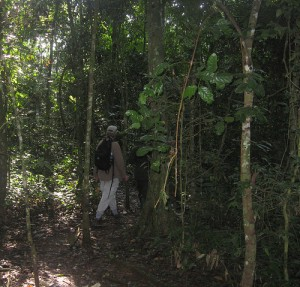 Forest walk in Kibale National Park (2)