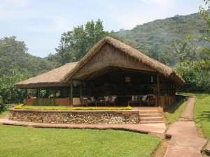 Gorilla Forest Camp (7)