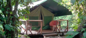 Kibale Forest Camp (1)