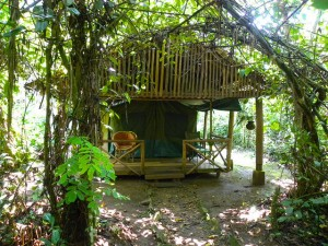 Kibale Forest Camp (10)