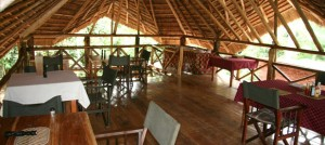 Kibale Forest Camp (9)