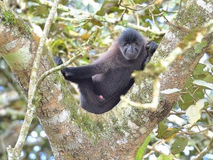 Kibale Forest National Park (4)