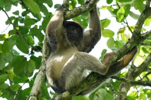 Kibale Forest National Park (7)