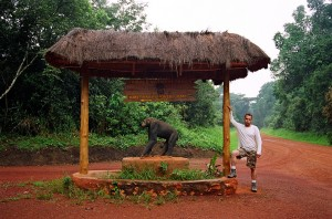 Primate Lodge in Kibale (2)