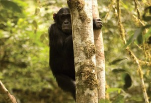 Primate Lodge in Kibale (4)