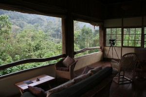 Volcanoes Bwindi Lodge (8)